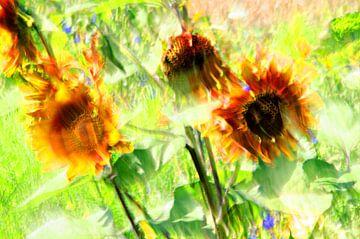 Sonnenblumen in einem Sonnenblumenfeld von Jessica Berendsen