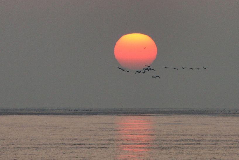 Trekvogels bij zonsopkomst sur Bob Bleeker