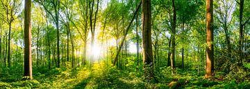 Lichtung im Wald bei Sonnenuntergang von Günter Albers