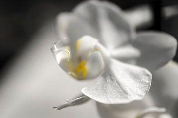 Orchidee macro van Robby Stifter