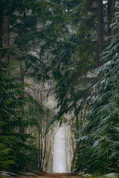 Pad tussen de dennenbomen in het Speulderbos tijdens een koude ochtend in de winter van Sjoerd van der Wal