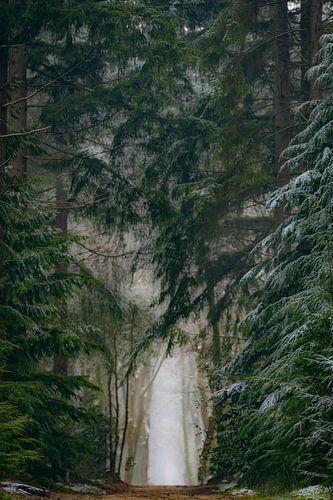 Pad tussen de dennenbomen in het Speulderbos tijdens een koude ochtend in de winter