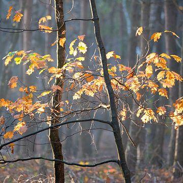 Herbst von Johanna Blankenstein