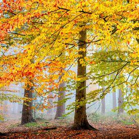 Una Foresta Particulare von Lars van de Goor