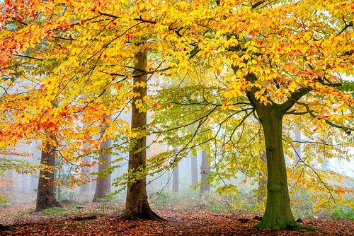 Una Foresta Particulare