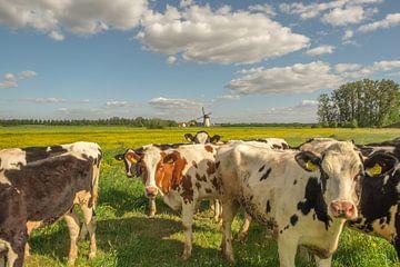 Koeien Holstein Friesian en molen De Marsch in Lienden van Moetwil en van Dijk - Fotografie