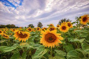 Sunflowers van