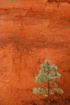 Bryce-Nationalpark, Utah, USA von Peter Out