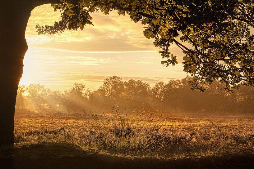 Morning has broken - Een gouden zonsopkomst van R Smallenbroek