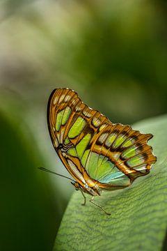 Hallo mooie vlinder