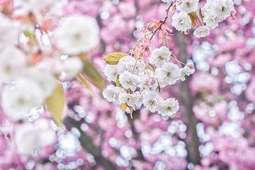 Fleur de fête blanche et rose sur Arja Schrijver Fotografie