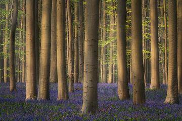 De paarse oase van eenvoud van Joris Pannemans - Loris Photography