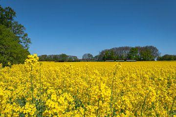 Course de Roland dans le champ de viol près de Lonvitz sur l'île de Rügen sur GH Foto & Artdesign