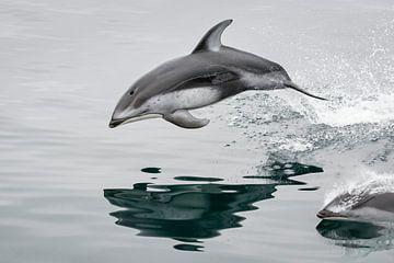 Frei wie ein springender Delfin von Lex van den Bosch