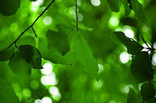 Beech Leaf Canopy van