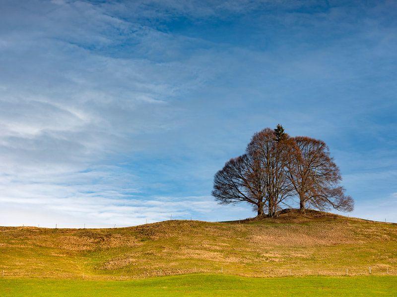 Baumgruppe an einem Hügel von Andreas Müller