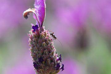 Insekt paars van Jorick Janssen