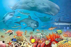 Dieren in de zee