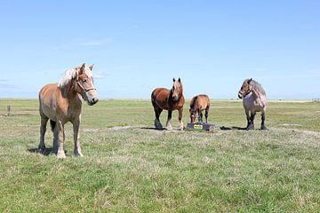 Paarden van Henk Katuin