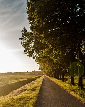Coucher de soleil sur Niels Heijne