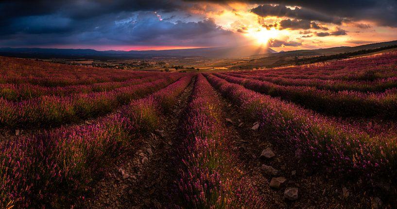 Zonsondergang lavendel veld Zuid-Frankrijk van Martijn van Steenbergen
