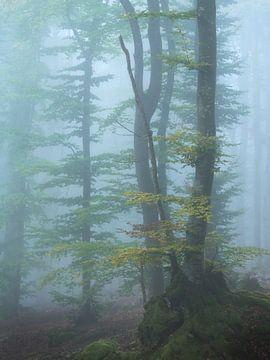 Prachtige herfstkleuren op een mistige ochtend in het Mullerthal in Luxemburg. van Jos Pannekoek