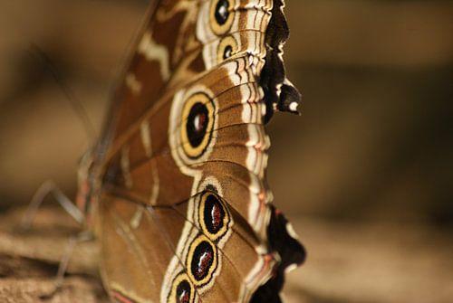 Vlinder von Robbert van der Kolk