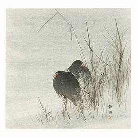 Wasservögel im Schilf von Affect Fotografie