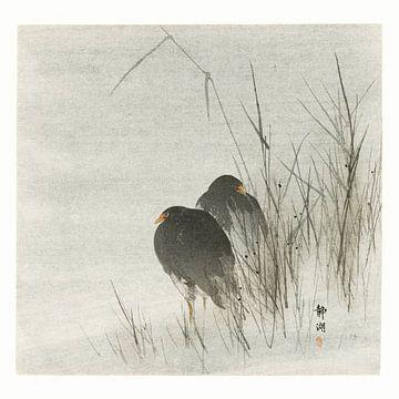 Wasservögel im Schilf