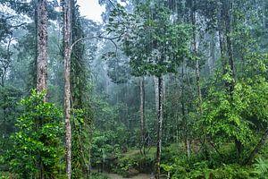 Regenwoud in Borneo
