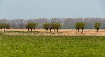 Pollard-Weiden