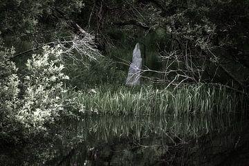 Haunted forest van Wendy Tellier - Vastenhouw