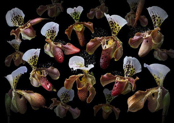 Orchidea ocarina van Olaf Bruhn