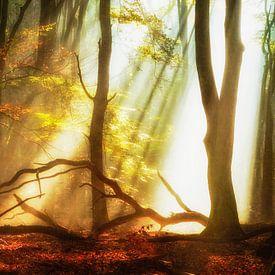 Forest Gems von Lars van de Goor