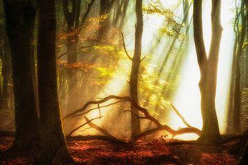 Forest Gems van
