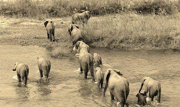 Elephant Family sur joey berkhout