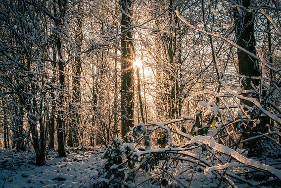 Winterzon van Stefan Verheij
