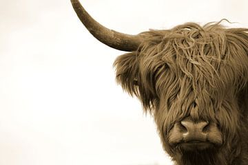 Kop Schotse hooglander sepia van Sascha van Dam