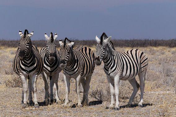 Zebra's - Etosha National Park van Eddy Kuipers