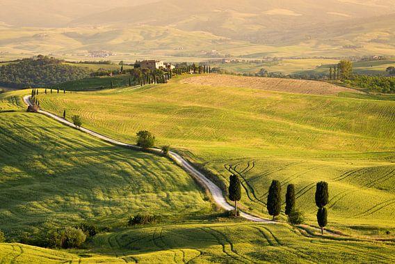 Cipressen langs 'Gladiator Road strada bianca' in Toscane in de avondzon