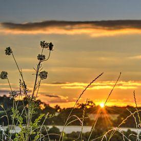 Coucher de soleil avec Fleurs sauvages sur Frans Blok
