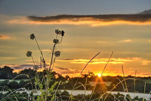 Zonsondergang met veldbloemen van