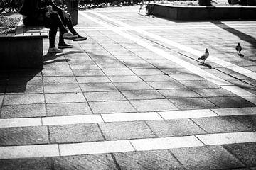 Tauben auf Plein 1992 in Maastricht von Streets of Maastricht
