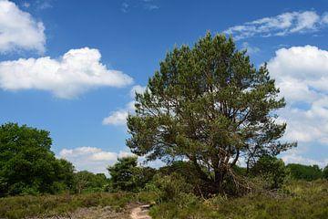 Een zonnige boom op de hei van Gerard de Zwaan