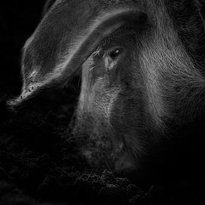 Wat een varken doet