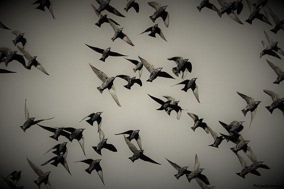 Vogelvlucht spreeuwen