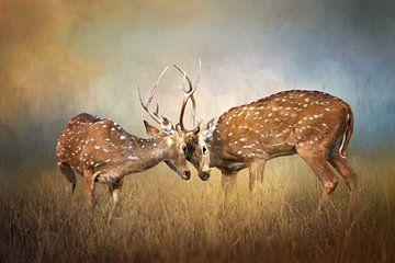 Zwei kämpfende Hirsche mit orangefarbenen und braunen Farben von Diana van Tankeren