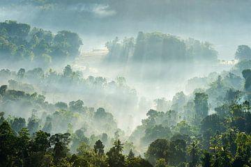 Mistige ochtend in Sri Lanka van Laura Vink