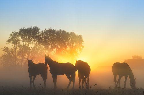 Paarden in de mist op een mooie voorjaarsochtend in mei