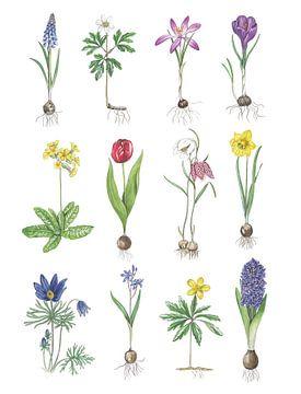 Les fleurs du printemps sur Jasper de Ruiter